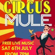 Circus Mule